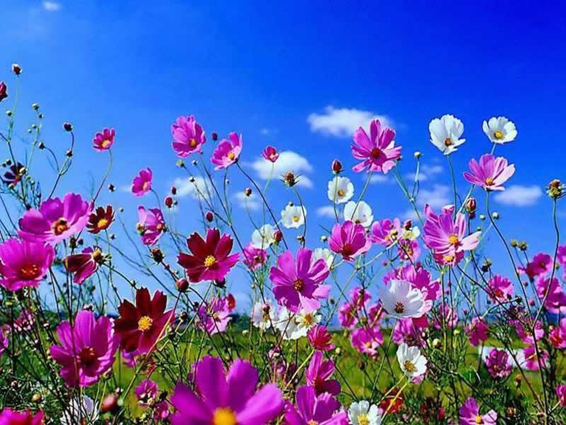 """Quinto appuntamento di """"Come alla corte"""" con 'Cosa dicono i fiori', titolo della conferenza diSalvatore Cozzolino, docente di Botanica dell'Università degli Studi di Napoli Federico II, che si terràgiovedì 3 [...]"""