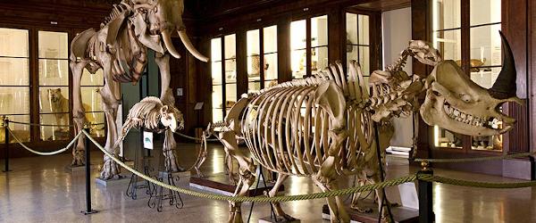 Circa 300.000 reperti provenienti da tutto il mondo distribuiti su 4000 mq di superficie. Questo il patrimonio custodito nel Centro Museale federiciano e messo a disposizione del grande pubblico. IlCentro Musei [...]